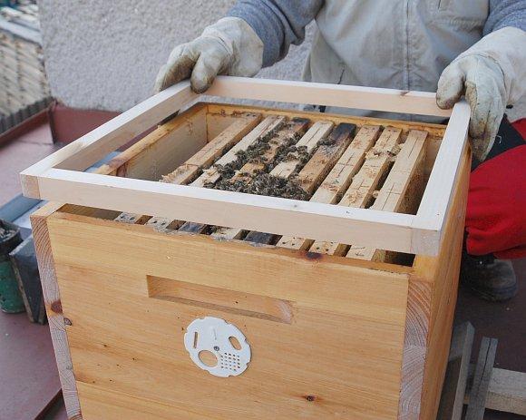 Krmení včel cukrovým těstem - zvýšíme prostor pomoci rámečku vysokého 2,5 až 3 cm